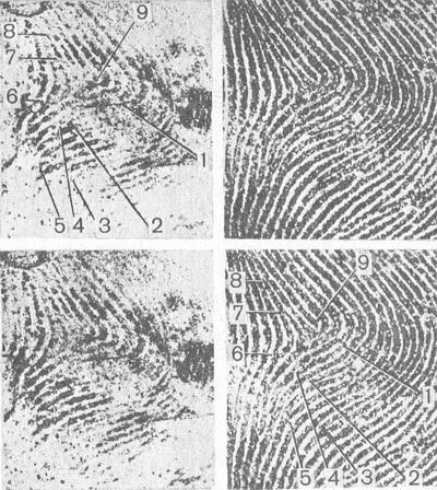 Идентификация личности по